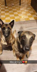 Nala & Leyso